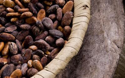 Pour en savoir plus sur le Cacao