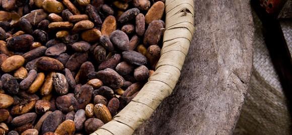 chocolat comment ça pousse (6)