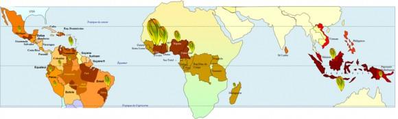 producteurs cacao monde